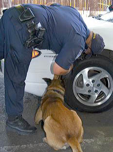 U.S. Customs and Immigration agents use a drug detection dog on automobiles waiting to enter the United States port of entry at the Tijuana, Baja California, Mexico/San Diego, California border crossing.