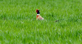 Boise policy of urban sprawl and annexation has eliminated hundreds of acres of farm land and wildlife habitat.
