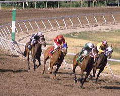 Horse race in Boise, Idaho. horse, race, jocky, competition, ride, track, run, sport, turf, jockey