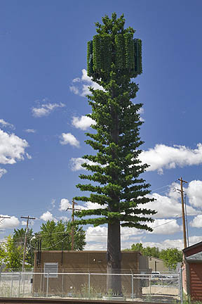cell tower pine